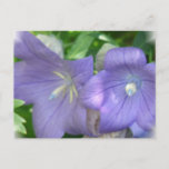 Balloon Flower Blossom Postcard