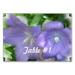 Balloon Flower Blossom Table Number