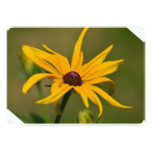 Black Eyed Susan Solitude Card