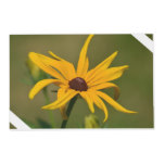 Black Eyed Susan Solitude Placemat