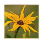 Black Eyed Susan Solitude Wooden Coaster