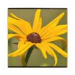 Blooming Black Eyed Susan Wood Coaster