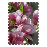 Blooming Magnolia Card