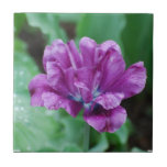 Blooming Purple Parrot Tulip Ceramic Tile