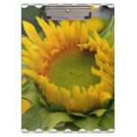 Budding Sunflower Clipboard