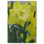 daffodil-22.JPG Post-it Notes