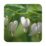 Delicate White Bleeding Heart Beverage Coaster