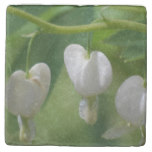 Delicate White Bleeding Heart Stone Coaster