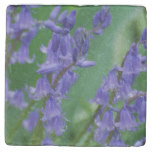 Dew on Bell Flowers Stone Coaster