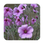 Field of Geraniums Drink Coaster