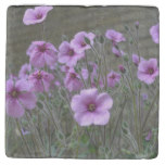 Field of Geraniums Stone Coaster