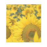 Field of Sunflowers Notepad