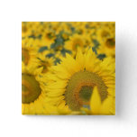 Field of Sunflowers Square Pin