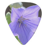 Flowering Balloon Flowers Guitar Pick