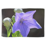 Flowering Balloon Flowers Kitchen Towel