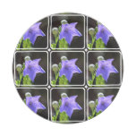 Flowering Balloon Flowers Paper Plate
