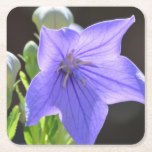 Flowering Balloon Flowers Square Paper Coaster