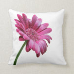 Gerbera Daisy Pillow