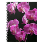 Orchid Blossoms Notebook