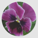 Pansy Pictures Sticker