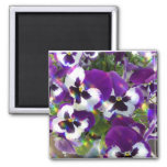 Pansy Square Magnet
