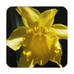 Perfect Daffodil Beverage Coaster