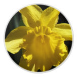 Perfect Daffodil Ceramic Knob