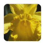 Perfect Daffodil Coaster
