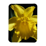 Perfect Daffodil Magnet