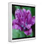 Perfectly Purple Parrot Tulip 3 Ring Binder
