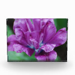 Perfectly Purple Parrot Tulip Acrylic Award