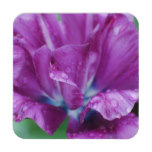 Perfectly Purple Parrot Tulip Drink Coaster