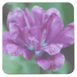 Perfectly Purple Parrot Tulip Square Paper Coaster