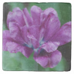 Perfectly Purple Parrot Tulip Stone Coaster