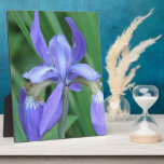 Picture of an Iris  Plaque