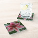 Pink Amaryllis Glass Coaster