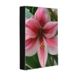 Pink Amaryllis Mini Binder