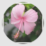 Pink Hibiscus Stickers
