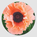 Poppy Flower Sticker