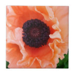 Poppy Flower Tile