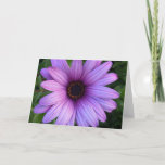 Pretty Aster Flower  Greeting Cards