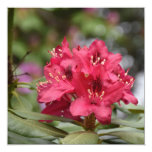 Pretty Blooming Red Rhododendron Blossom Invitation