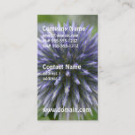 Pretty Globe Thistle Business Card