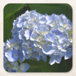 Pretty Light Blue Hydrangea Flowers Square Paper Coaster