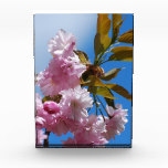 Pretty Pink Cherry Tree Acrylic Award