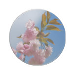 Pretty Pink Cherry Tree Drink Coaster