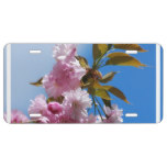 Pretty Pink Cherry Tree License Plate