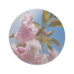 Pretty Pink Cherry Tree Sandstone Coaster