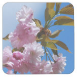 Pretty Pink Cherry Tree Square Paper Coaster