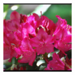 Pretty Pink Rhododendron Card
